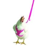 Pink Chicken Harness Image