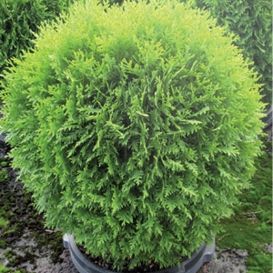 Trees & Shrubs Now 50% Off Marked Price