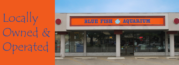 Blue Fish Aquarium