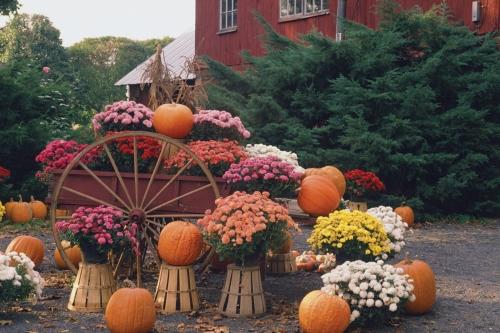 Calendar Coupon: 20% off Fall Harvest Décor