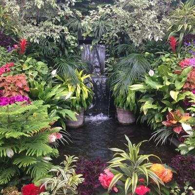 Water Garden/Pond