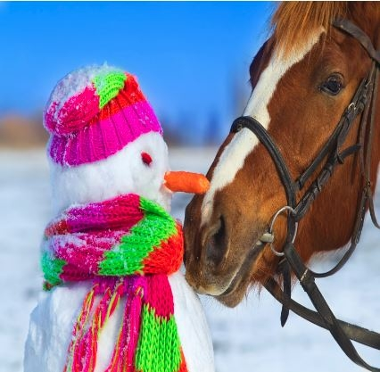 Tonight's FREE Equine Seminar  Image