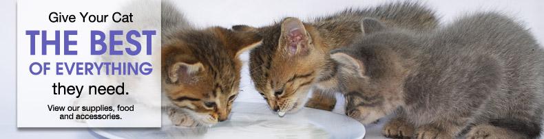 kitten slider