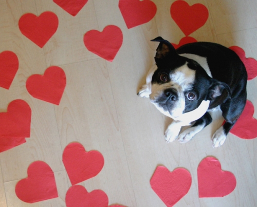 Valentine;s Day Cookies for Your Dog