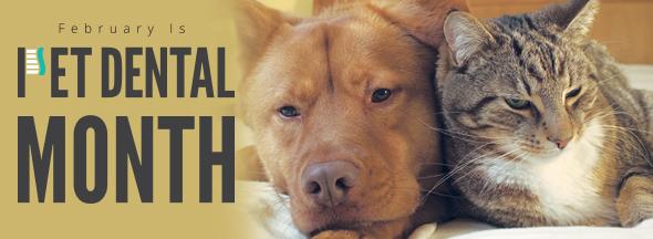 Pet Dental Month