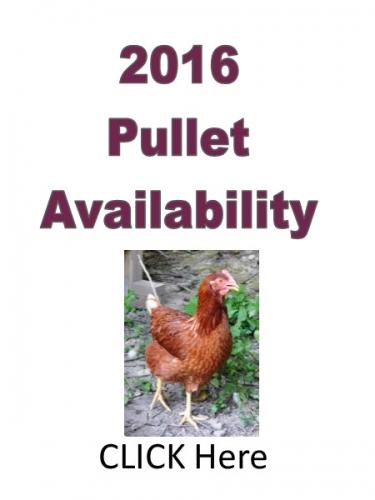 2016 Pullet Order Form