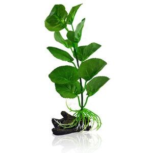 Betta Plant Pennywort - One Size
