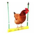 The Chicken Swing  Image