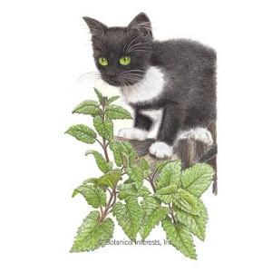 Catnip Seeds, .75 grams