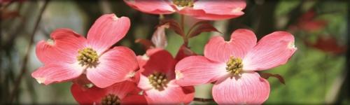 Spring's arrival brings visual vibrancy...