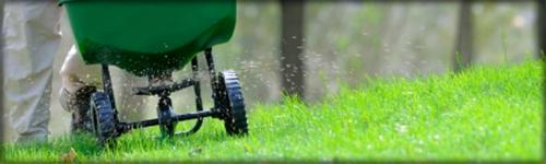 A healthy summer lawn...