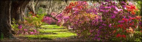 Spring's arrival brings visual vibrancy..