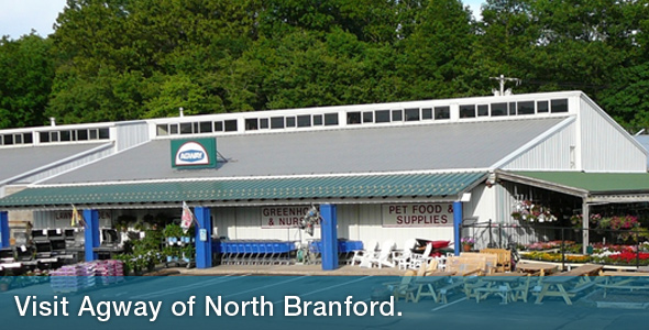 North Branford Store