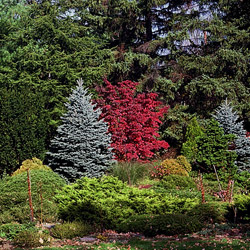 trees_shrubs