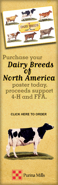 Purina Dairy Breed Poster