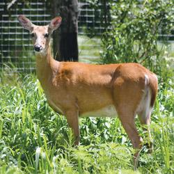 Deer Resistant Plant List