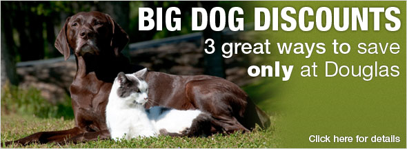 Big Dog Discounts