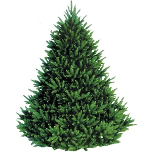 $10 Off 6 ft.-8 ft. Vermont Christmas Trees