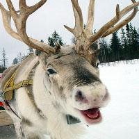 Visit with Blitzen