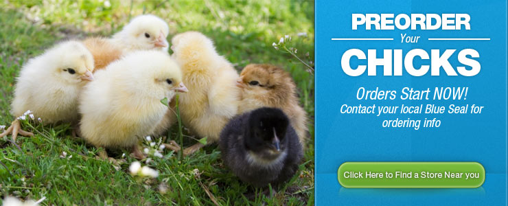 Pre-order your chicks