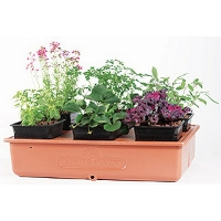 Green College Class: Container Gardening