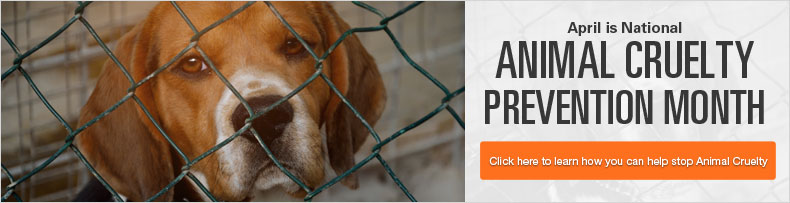 Animal Cruelty Prevention Month