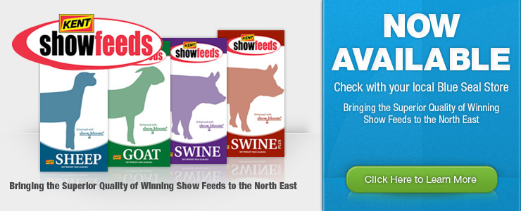 Kent Show Feeds Now Available