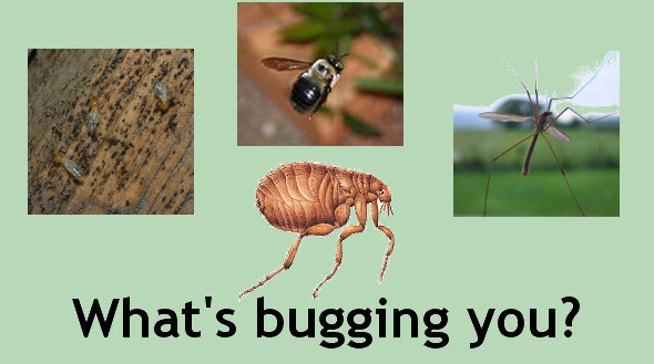 What's Bugging You