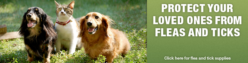 Protect from Fleas & Ticks