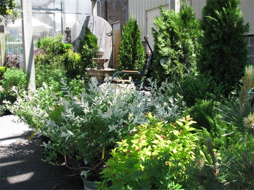 25% Off Trees and Shrubs