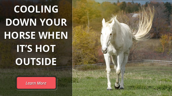 Cooling Down Your Horse